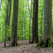 Naturwaldreservat Kleinengelein